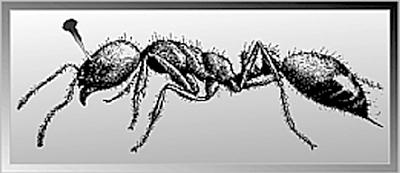 Mickey Mouse, guagga a příběh mravence zápašného (Mark Dion a Muzeum jurské technologie)