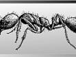 Mravenec zápašný z Muzea jurské technologie