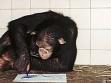 Šimpanz Jimmy, Liberec