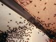 10 000 much, které Poison Idea vypustili nad bar při vernisáži v Hamburku