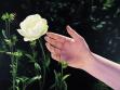 Mustafa Hulusi. S/T (Dark Rose), 2006. Óleo sobre lienzo,  213,5 x 300,5 cm.
