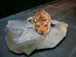 Kamen Stoyanov, Tiger steps, 2007, Installation, photographs and objects
