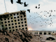 Oush Grab, architectural projections of bunker rendered useless, with holes, and acknowledging bird migratory patterns.
