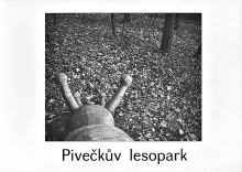 Zapletalov Veronika: Pivekv lesopark